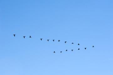 Birds at the lake of Suchitlan