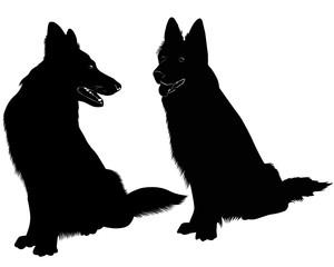 Shepherd Dog dog animal