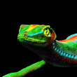 Gecko Lizard Close up 3d digital Art