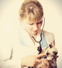 vet listens kitten
