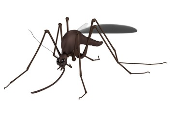 realistic 3d render of mosquito