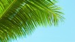 Light breeze rustles the palm fronds on sky background. Thailand