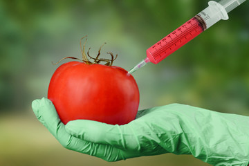 Scientist holds tomato with syringe