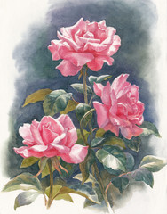 Цветы акварелью, розы освещённые солнцем.