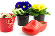 wooden shoe, bucket and primroses isolated