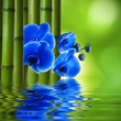 orchid flower with bamboo and reflection in water