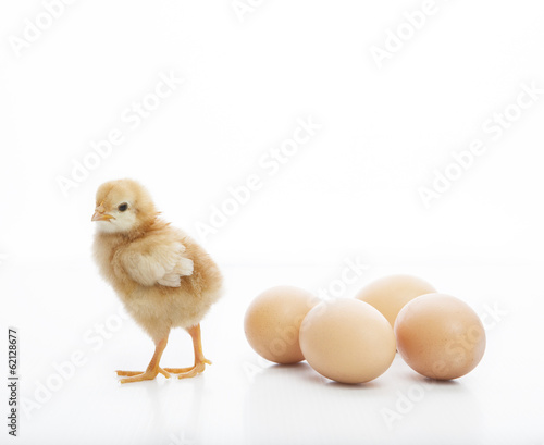 new born yellow baby chick standing on white beside fresh eggs l