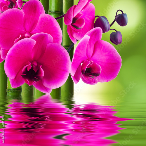 orchid flower with bamboo and reflection in water - 62129034