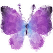 Violet butterfly of triangles