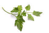 Sprig of parsley isolated on white