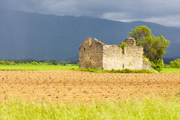 field with a ruin of house and tree, Plateau de Valensole, Prove