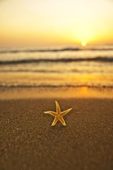 sea star at the beach