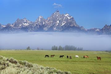 Grand teton und Pferde