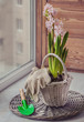 pink hyacinth in a white basket. Toning