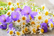 Campanula and chamomile flowers on table