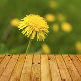 Spring background dandelion wooden parquet