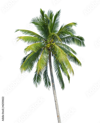 Deurstickers Palm boom coconut tree