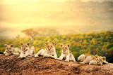 Lion cubs waiting together.