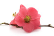 canvas print picture - Fleur zen