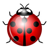 Vector Illustration of ladybird (symbol of good luck)