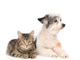cat and dog lying together and. isolated on white background