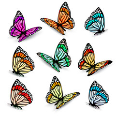 Set of realistic colorful vector butterflies.