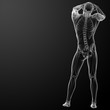 3d rendered skeleton - back view