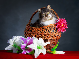 Grey cat in basket