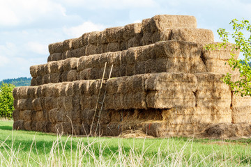 Hay stacks in a field and blue sky