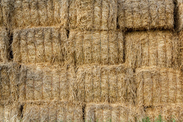 wall surface of the straw bales