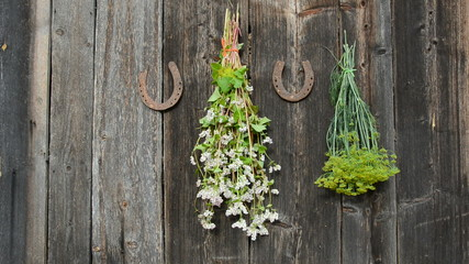 hanging medical and spice herbs bunch