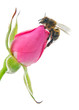 bee and pink
