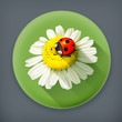 Ladybug and chamomile long shadow vector icon
