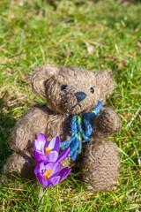 Teddy mit Blume, auf einem Rasenhintergrund