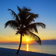 View of Beach with palm tree at sunset