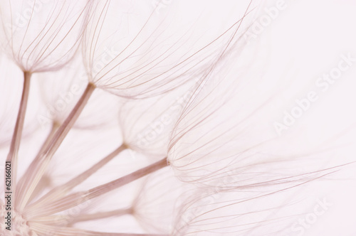Dandelion close-up - 62166021