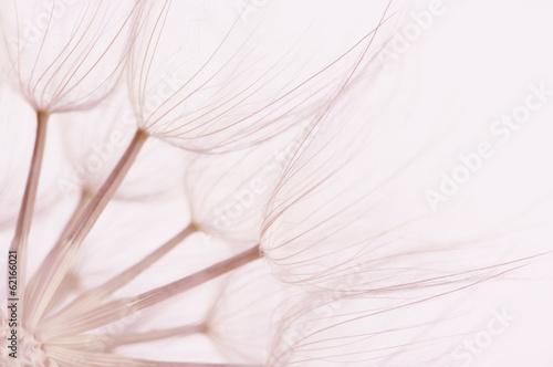 Dandelion close-up - 62166021