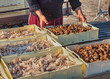 fishermen with crate of crustaceans and shellfish