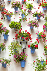 Blue Flowerpots and Red Flowers on a white wall with vintage lan