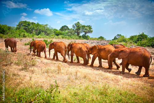 Staande foto Buffel Herd of baby elephants , Kenya.