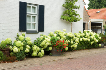 House with Hydrangea flowers in summer