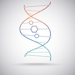 the DNA molecule. gradient