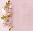 Floral card with blossom cherry in pastel colors