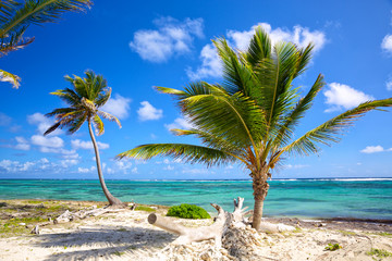 Caribbean coastline with palm trees, Dominican Republic