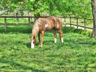 Beautiful horse on grassland 3