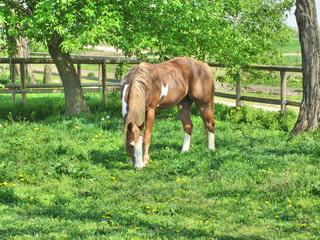 Beautiful horse on grassland 2