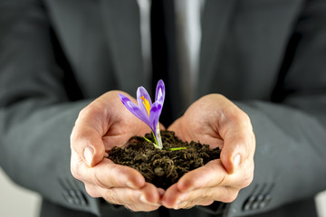 Male hands cupping soil with a purple freesia