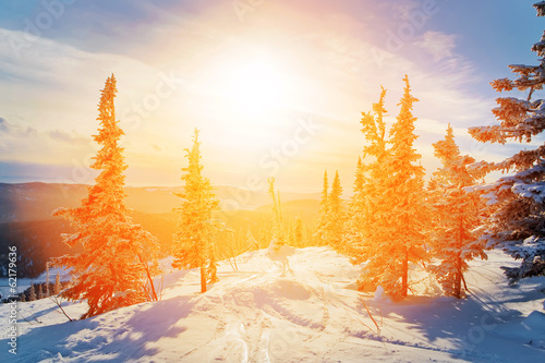 winter mountain forest
