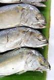 mackerel fishes on green leaf