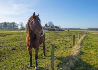 Horse standing in a sunlit meadow in winter